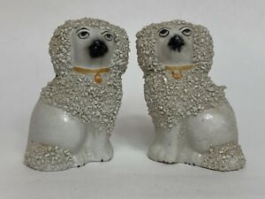 This image has an empty alt attribute; its file name is poodles.jpg